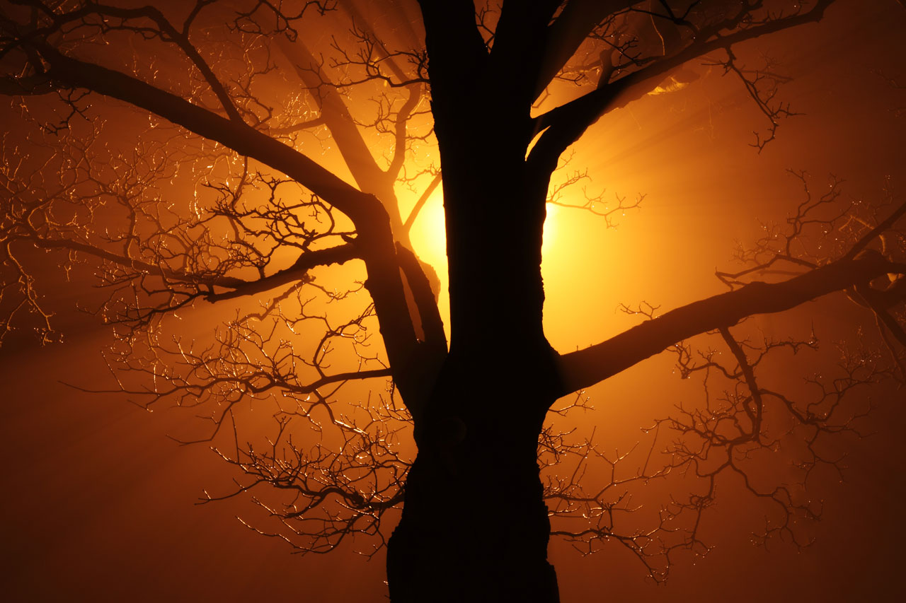 tree-backlit